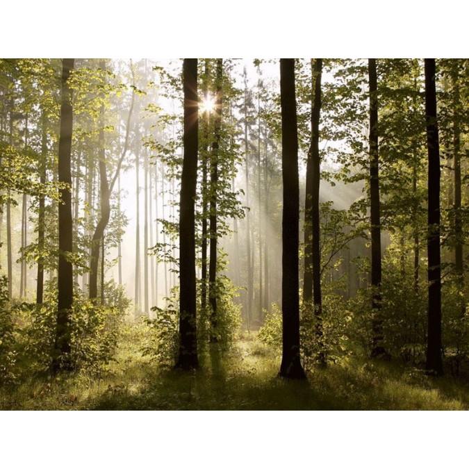 Fototapeta Na Ze Ty D Ln Fts 0181 Forest Velikost 360 X 254 Cm Kupsi